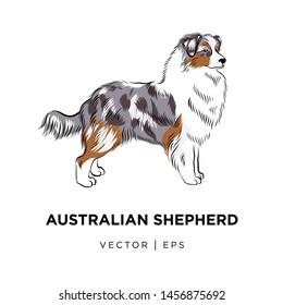 Tricolor Australian shepherd dog outline sketch. Hand drawn cute Sheltie illustration, line art doodle.