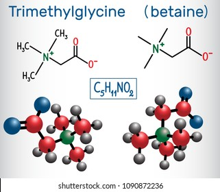 Trimethylglycine (TMG, betaine, glycine betaine), is found in sugar beets.  Structural chemical formula and molecule model. Vector illustration