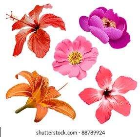 Tropic flowers vector. Hawaiian hibiscus and exotic aloha plants isolated illustration