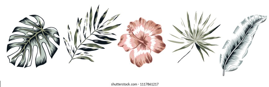 Tropical banana, monstera palm leaves, hibiscus flower isolated on the white background. Design elements. Greenery foliage vector illustration. Summer beach floral design. Paradise nature.