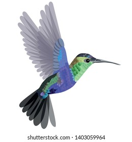 Tropical bird hummingbird in blue-green tones isolated on white background. Vector illustration.