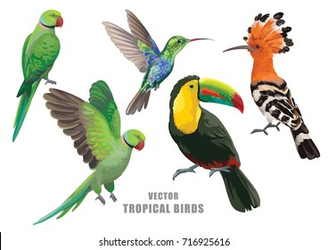 Tropical birds collection: green parrots, humming-bird, toucan and hoopoe. Vector design isolated elements on the white background.