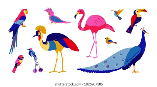 Tropical birds. Exotic colorful parrots and jungle forest birds, isolated collection of southern wild birds on white background. Vector illustration set of bright trendy modern design templates