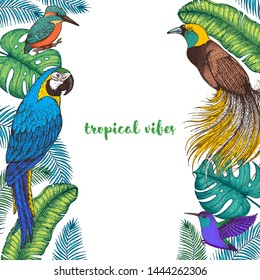 Tropical birds and palm leaves vector illustration. Colorful kingfisher bird, ara parrot, colibri and bird of paradise, hummingbird . Hand drawn illustration. Summer design template. Tropical fauna.