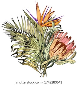 Tropical bouquet with exotic king protea, Paradise Bird flowers and palm leaves. Hand drawn vector illustration isolated on white.