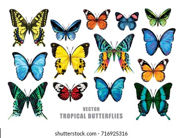 Tropical butterflies set. Vector isolated elements on the white background.