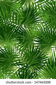 Tropical Cabbage palm