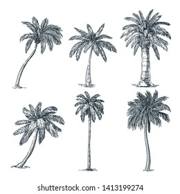Tropical coconut palm trees set, isolated on white background. Vector sketch illustration. Hand drawn tropical plants and summer floral design elements.