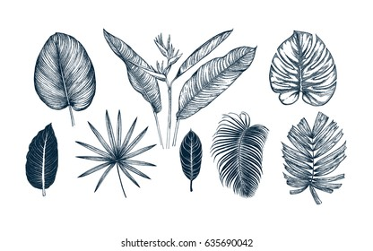 Tropical collection. Botanical hand drawn illustration. Template design for sail, wedding save date, envelope, valentine, for party, holiday decor. Collection of sketch object.