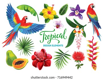 Tropical collection: exotic flowers, fruits, leaves and birds. Vector isolated elements on the white background.