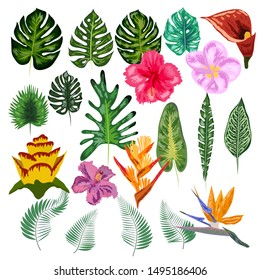 Tropical collection with exotic flowers and leaves. design isolated elements on the white background