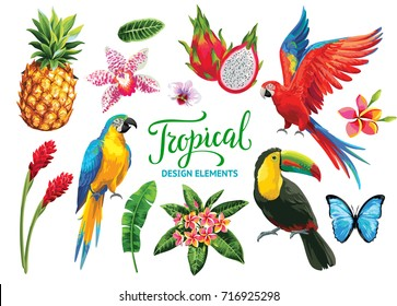 Tropical collection: exotic flowers, leaves, fruits, birds and butterflies. Vector isolated elements on the white background.