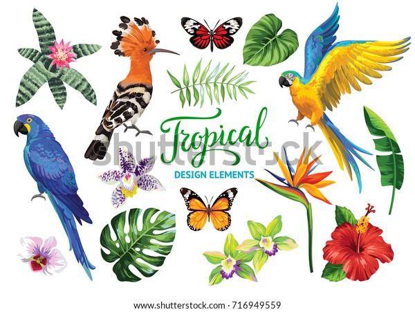 Tropische Sammlung: exotische Blumen, Blätter, Vögel und Schmetterlinge. Vektorgrafik einzeln auf weißem Hintergrund.