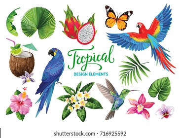 Tropical collection for jungle party: cocktails, exotic flowers, leaves, birds and butterflies. Vector design isolated elements on the white background.
