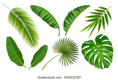 Tropical different type exotic leaves set. Jungle plants. Calathea, Monstera and palm leaves. Realistic vector  illustration isolated on white background