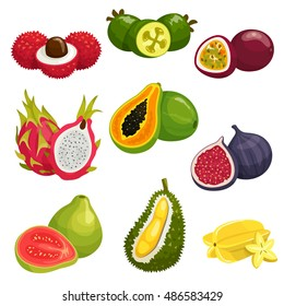 Tropical and exotic fruits isolated icons. Vector elements of lychee, dragon fruit pitaya, papaya, durian, passion fruit maracuja, carambola, fig, guava, feijoa