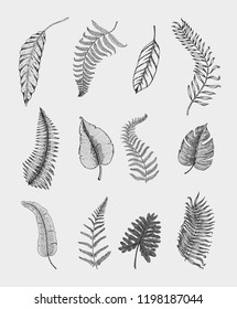 tropical or exotic leaves, leaf of different vintage looking plants. monstera and fern, palm with banana botany set. flowers engraved vintage, hand drawn. botanical organic product. green background.