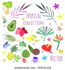 Tropical flora and fruit collection
