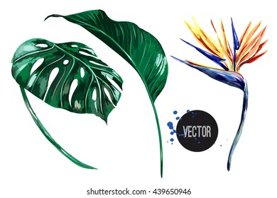Tropical flower, jungle leaves, bird of paradise. Vector exotic illustration isolated on white background