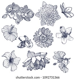 tropical flower set, hand drawing, vector isolated on white background