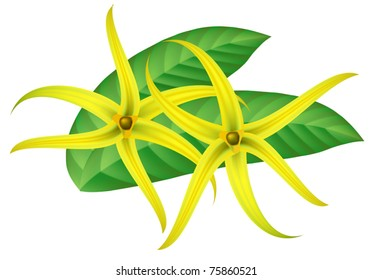 Similar images stock photos vectors of tropical flower ylangylang tropical flower ylang ylang cananga vector illustration ccuart Gallery