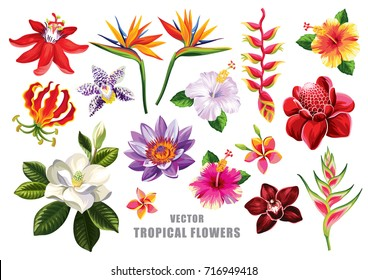 Tropical flowers collection. Vector isolated elements on the white background.