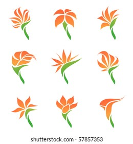 Tropical flowers. Elements for design. Vector illustration.