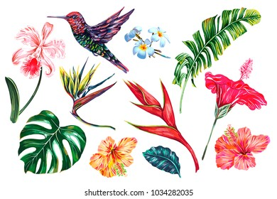 Tropical flowers, jungle leaves, banana leaf, monstera, hibiscus, bird of paradise flower, plumeria, orchid, strelitzia, hummingbird. Vector summer exotic illustrations, floral elements isolated