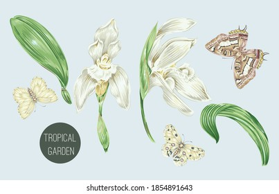 Tropical flowers, jungle leaves, butterflies, orchid flower set isolated on grey background. Vintage vector natural illustrations. Hand drawn elements. Floral clip art. Exotic botanical print.