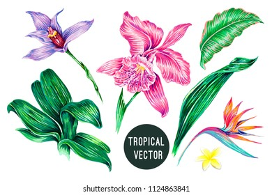 Tropical flowers, jungle leaves, orchid, bird of paradise flower, strelitzia, frangipani, hawaiian plants. Botanical exotic summer illustrations. Vector floral elements isolated