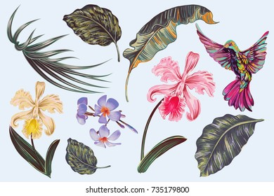 Tropical flowers, jungle leaves, plumeria, orchid flower, hummingbird. Vector exotic illustrations, floral elements isolated. Vintage illustration for greeting card, wallpaper