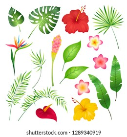 Tropical flowers and leaves. Caribbean tropical flower leaf hibiscus orchid hawaii exotic, garden jungle summer botanical vector illustration