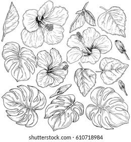 Tropical Flower Line Drawing Images Stock Photos Vectors Shutterstock Learn how to draw tropical leaves pictures using these outlines or print just for coloring. https www shutterstock com image vector tropical flowers palm leaves hand drawn 610718984