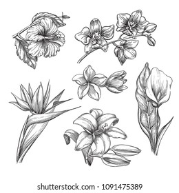 Tropical flowers set, vector sketch illustration. Hand drawn tropic nature and floral design elements. Hibiscus, plumeria, lily, calla, orchid isolated on white background.