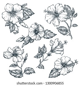 Tropical flowers set, vector sketch illustration. Hand drawn tropic nature and floral design elements. Hibiscus isolated on white background.