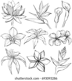 Tropical flowers - sketch style