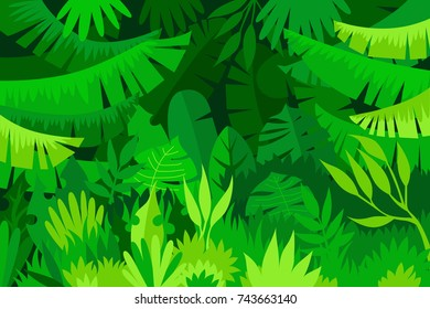 tropical forest. jungle. landscape