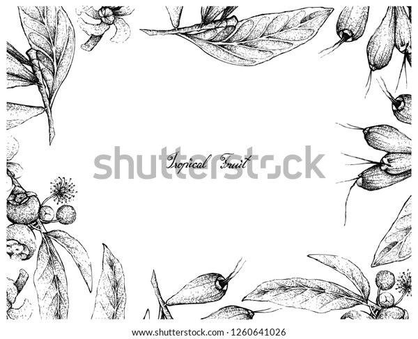 Tropical Fruit Illustration Frame Hand Drawn Stock Vector Royalty Free 1260641026