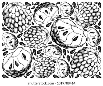 Tropical Fruit, Illustration Wallpaper Background of Hand Drawn Sketch of Custard Apple and Annona Reticulata Fruits.
