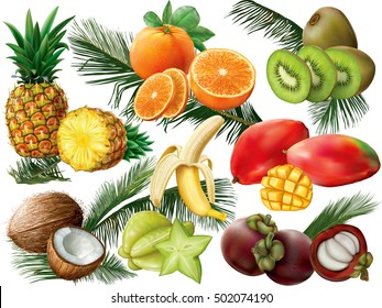 Tropical fruit set with palm leaves on white background. Vector illustration