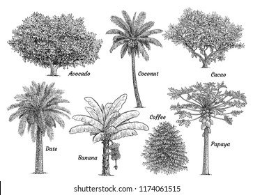 Tropical fruit tree collection, illustration, drawing, engraving, ink, line art, vector