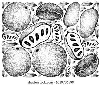 Tropical Fruits, Illustration Background of Hand Drawn Sketch Fresh Wood Apple or Limonia Acidissima and Paw Paw or Asimina Triloba Fruits.