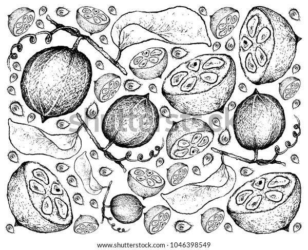 手描きのスケッチ僧フルーツ ルオ ハン グオ またはシライチア グロスベノリの背景に熱帯の果物 イラストの壁紙 のベクター画像素材 ロイヤリティフリー
