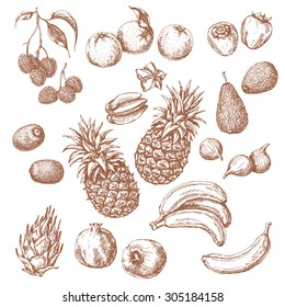 Tropical Fruits Set. Hand drawn sketch of lychee, pomegranate, orange, banana, dragon fruit, fig, kiwi fruit, persimmon, starfruit, avocado and pineapple.