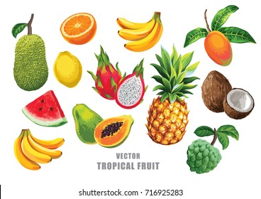 Tropical fruits set. Vector isolated elements on the white background.