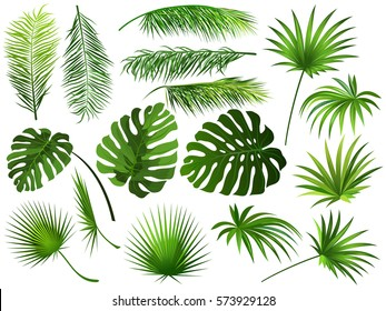 Tropical green  leaves (coconut palm, monstera, fan palm, rhapis). Set of hand drawn vector illustrations of exotic leaves on white background.