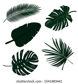 Tropical green leaves of different tree species.