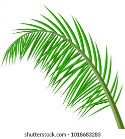 Tropical green leaves. Jungle leaves. Coconut palm, monstera, fan palm, rhapis. Natural leaf, exotic branches tree. Vector illustration in flat style