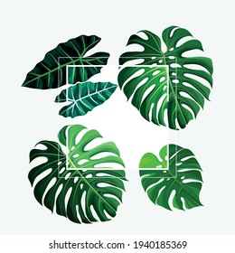 tropical green leaves taro frame with white background - vector frame high resolution