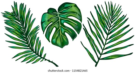 Tropical green leaves in a vector style isolated. Vector leaf for background, texture, wrapper pattern, frame or border.